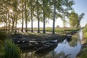 stock photo of marshes  - typical boats moored at the marsh of Fucecchio Tuscany Italy - JPG