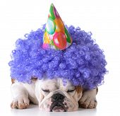 picture of wig  - birthday dog  - JPG