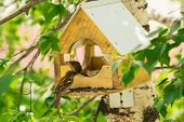pic of manger  - Sparrows in a manger peck sunflower seeds - JPG
