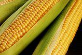 pic of corn cob close-up  - close up view of corn cob as background - JPG