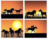Set of horse silhouette on sunset background. Vector illustration.