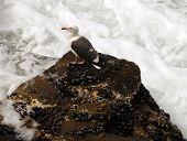Seagull In Foam