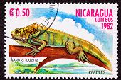 Canceled Nicaraguan Postage Stamp Green Iguana Lizard Branch Marsh