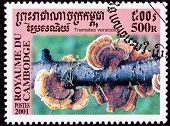 Canceled Cambodian Postage Stamp Red Turkey Tail Mushroom, Trametes Versicolor