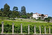 Italian Charming Villa In Vineyard