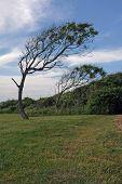 Trees Near Beavertail Lighthouse