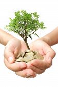 stock photo of bonsai tree  - Small tree growing from coins in hands - JPG