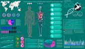 Medical Infographic Set. Human Anatomy, Body With Internal Organs. Illustration Of Heart Scan, Human poster