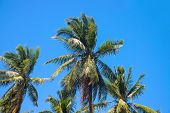 Paradise Landscape With Coco Palm Trees. Exotic Place View With Tropic Tree Silhouettes. Palm Tree J poster