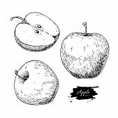 Apple Vector Drawing. Hand Drawn Fruit And Sliced Pieces. Summer Food Engraved Style Illustration. D poster