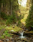 foto of backwoods  - Woodland Stream - JPG