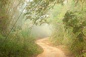 Misty morning. Ground road in jungle near Umphang. Tak Province in northwestern Thailand. January, t