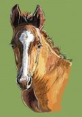 Colorful Cute Pony Foal Portrait. Young Pony Head  Isolated On Green Background. Vector Hand Drawing poster
