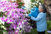Retired Senior Woman Enjoying Watering Her Blooming Orchids In The Garden.happy Early Retired. poster