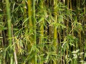 Green bamboo plants background texture pattern