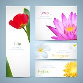 Brochure design, water lily flower, frangipani and tulip vector template. Exotic tropical flowers in