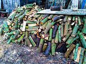 Harvesting Firewood For The Winter Home Harvesting Of Firewood Harvesting Of Firewood At Home poster