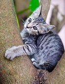 Pequeno gato tailandês na árvore.