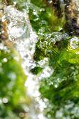 Abstract Scene Texture Of Aquatic Plants