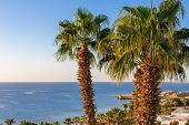 Tall Palm Trees Overlooking The Sea. Lush Tropical Palm Trees. Sea Horizon At A Tropical Resort. Tra poster