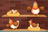 picture of egg-laying  - Illustration of the positions of a hen laying eggs - JPG