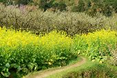 spring over a lush field of oilseed