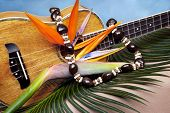 foto of kukui nut  - Still life of Hawaiian koa wood ukulele with fresh bird of paradise flower and kukuinut lei on blue backgound - JPG