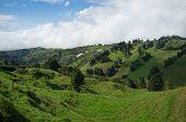 Grüne Costa Rica
