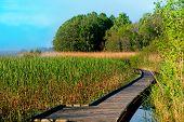 Boardwalk Path In Swamp