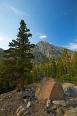foto of pine cone  - An ancient bristle cone pine tree stands in the foreground against a majestic mountain peak and enormous forest - JPG