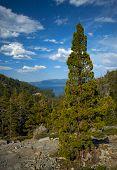 Pine Tree Mountain Vista