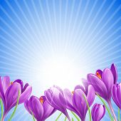 Beautiful spring flowers on sunny sky background