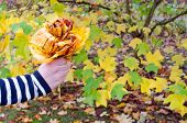 Hand Hold Decorative Flower Color Autumn Tree Leaf