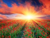 stock photo of farm landscape  - Sunset over a field of red poppies - JPG