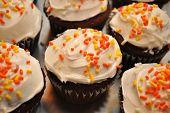 Festive Fall Cupcakes