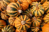Kamo Kamo Pumpkins