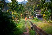 image of brahma  - temple in jungle - JPG