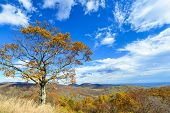 Autumn trees in Shenandoah National Park in October - Virginia, United States