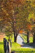foto of cade  - Late afternoon on a quiet country road in Cade - JPG