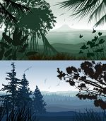 Forest Landscape. Illustration of tropical and pine forest