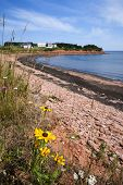 Wildflowers and red rocks on Prince Edward Island coast near village of North Rustico in Green Gable