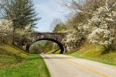 Spring Time on the Blue Ridge Parkway