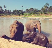 Elephants  on Sri Lanka