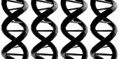 DNA X 4 preto
