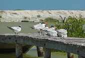 Water Birds On Pier