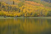 stock photo of colorado high country  - Colorado High Country ranch cabins and golden Aspen - JPG