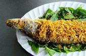 Sheatfish (micronema Apogon)