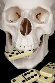 Skull Clutched In Teeth Dominoes