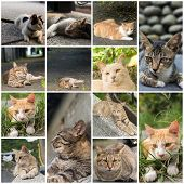 Tabby cat lying on the stone wall in the cat village of Houtong, Taiwan.
