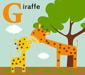 Animal alphabet for the kids:  G for the Giraffe